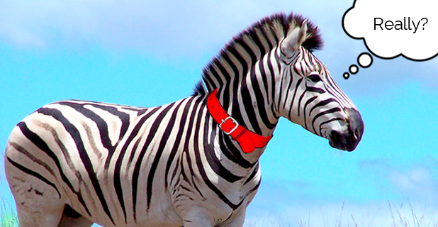 You're from Africa?! I Bet You had a Pet Zebra…