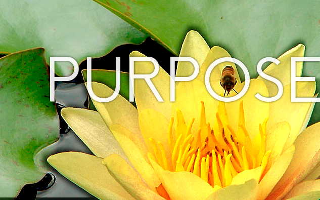Your Purpose is Not About You